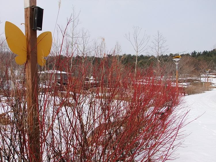붉은 가지의 식물