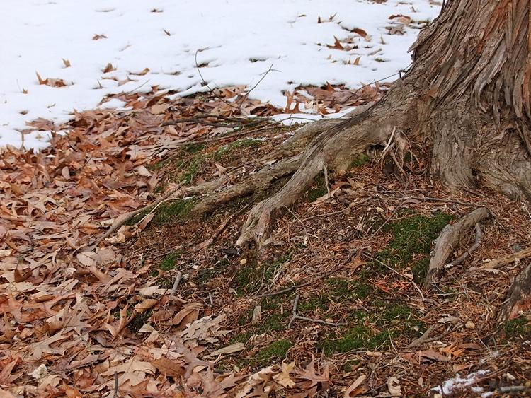 나무의 뿌리