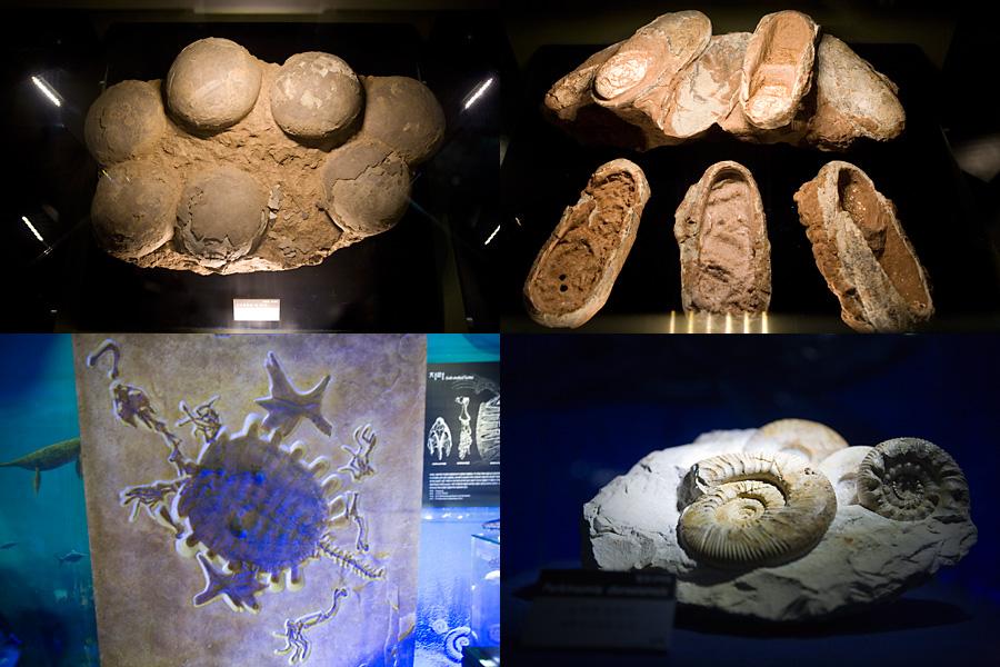 공룡알의 화석, 어떤 화석의 모습, 암모나이트 화석, 홀로그램