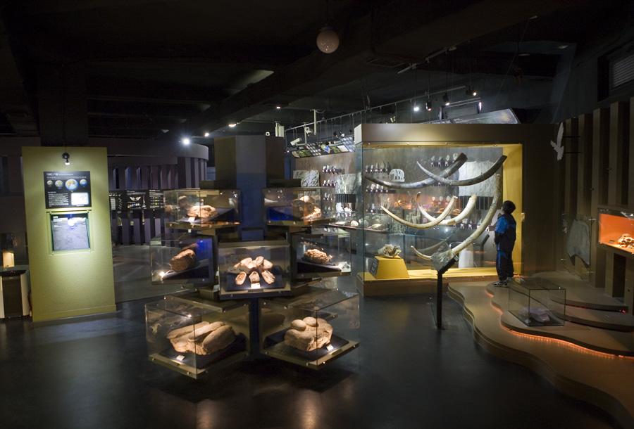 자연사 박물관 내부의 모습
