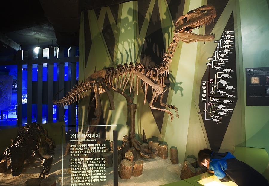 공룡 뼈가 전시되어 있는 모습