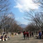 서울대공원 쪽으로 향하는 사람들