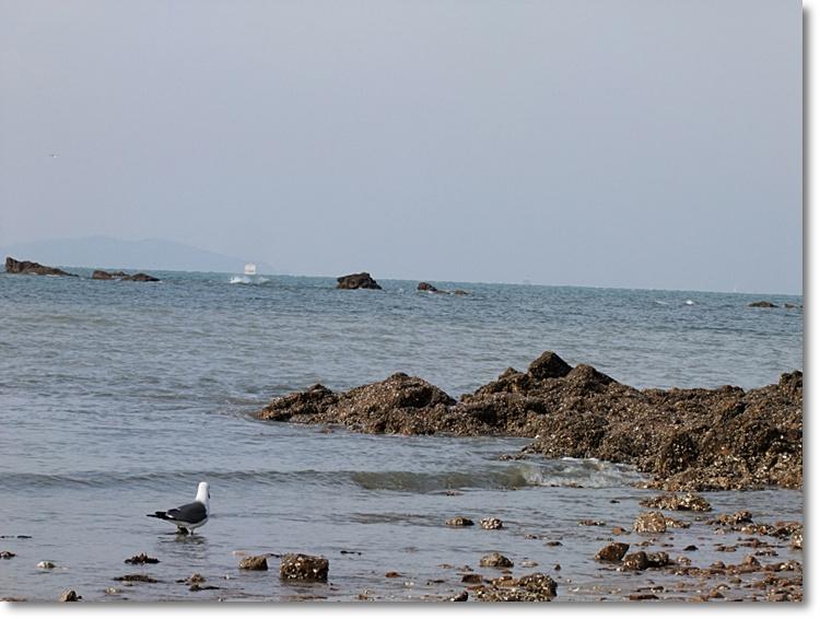 바닷물에 발을 담구고있는 갈매기의 모습