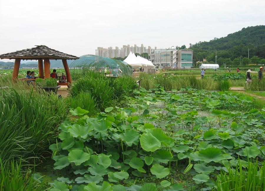 연꽃이 핀 연못과 오두막