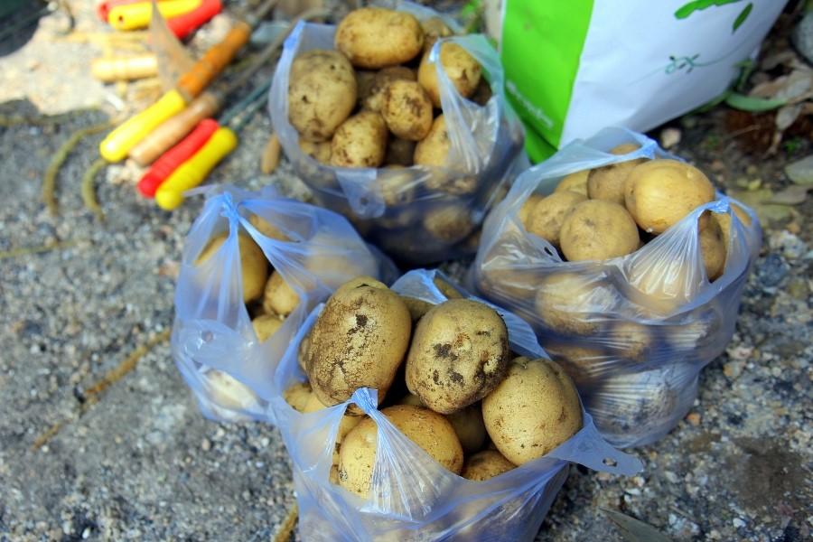 봉지에 담겨진 캔 감자들의 모습