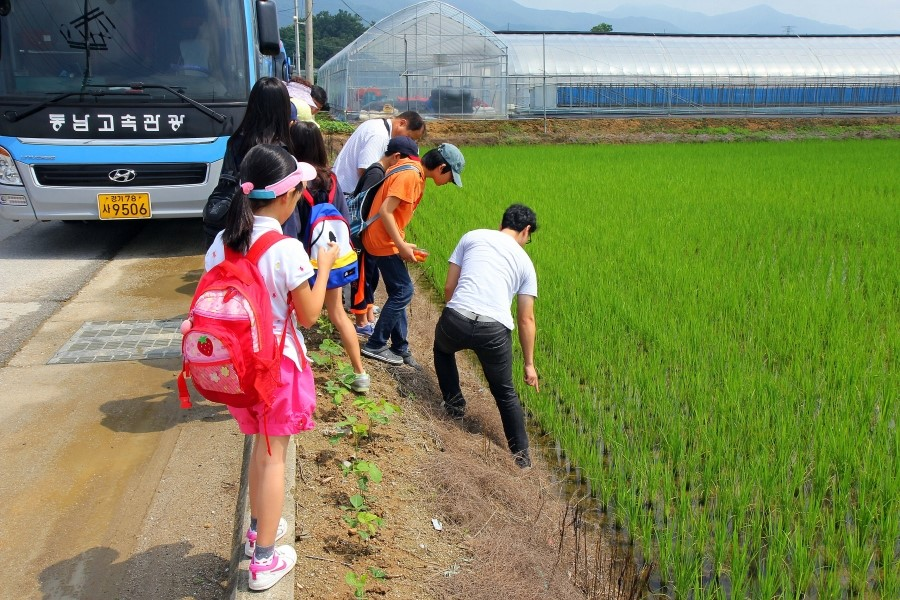 논에 있는 우렁이들을 관찰하는 아이들의 모습