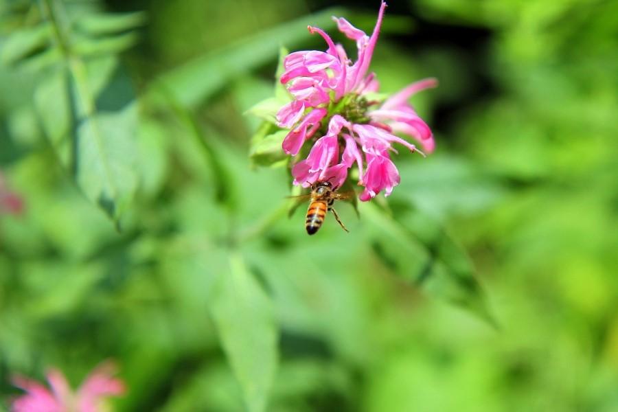 꽃에서 꿀을 따고 있는 벌의 모습