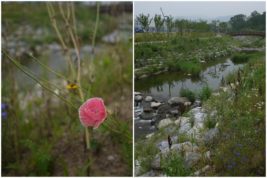 들꽃 / 돌 아래로 흐르는 강물