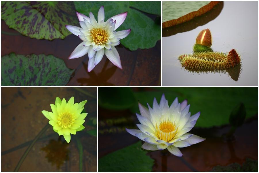 여러가지 색상의 물 위에 사는 수생식물들
