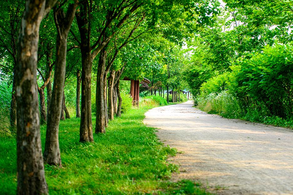 길가에 나무들이 줄지어져 서 있는 산책로의 모습
