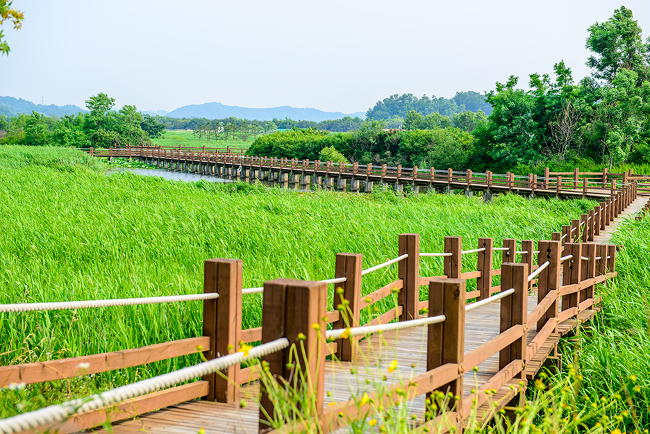 갈대밭을 따라 놓여 있는 긴 다리의 모습