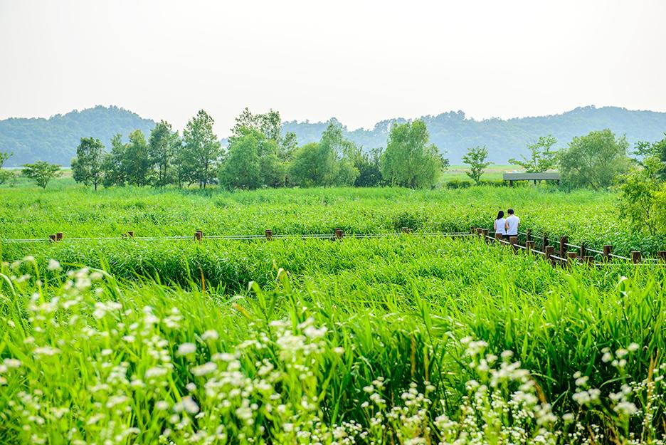 수풀이 우거진 아름다운 갈대밭의 모습
