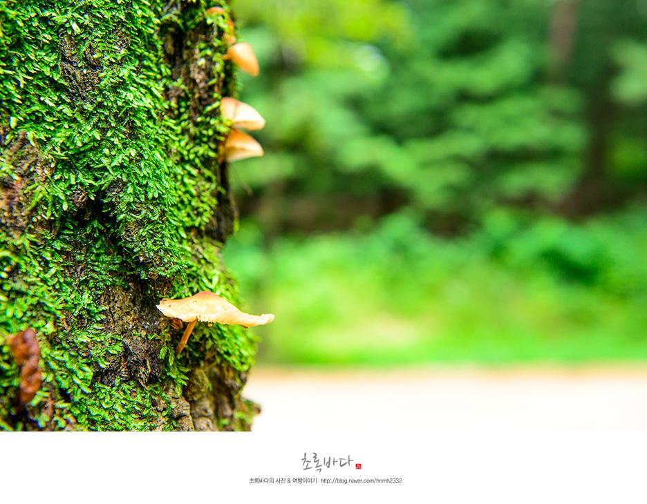 나무사이로 자란 푸른 잎과 버섯