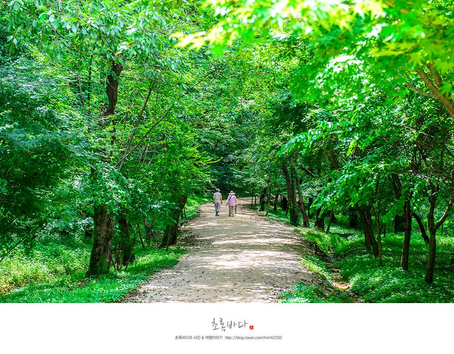 푸른 숲에 난 산책로