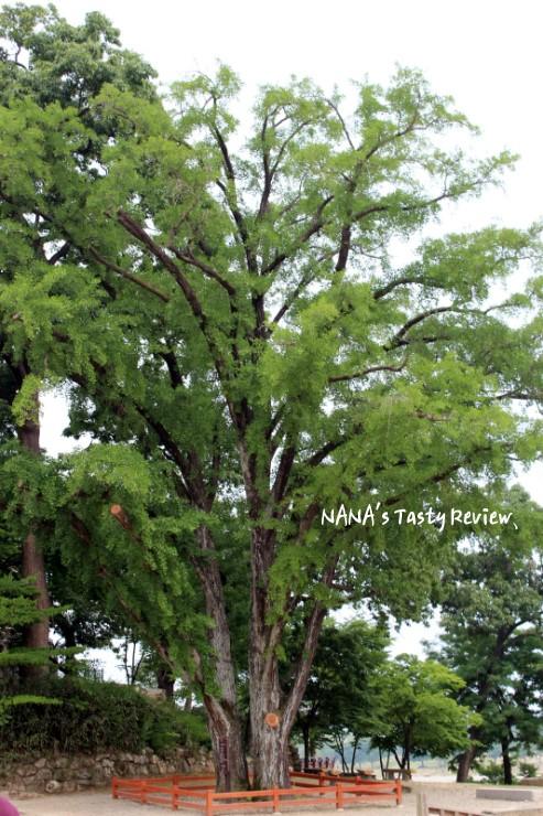 높게 자란 나무