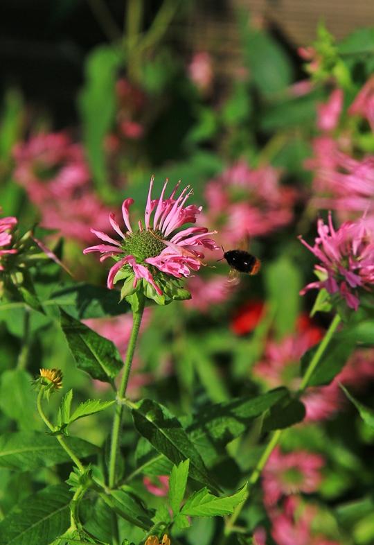 분홍색 꽃의 모습