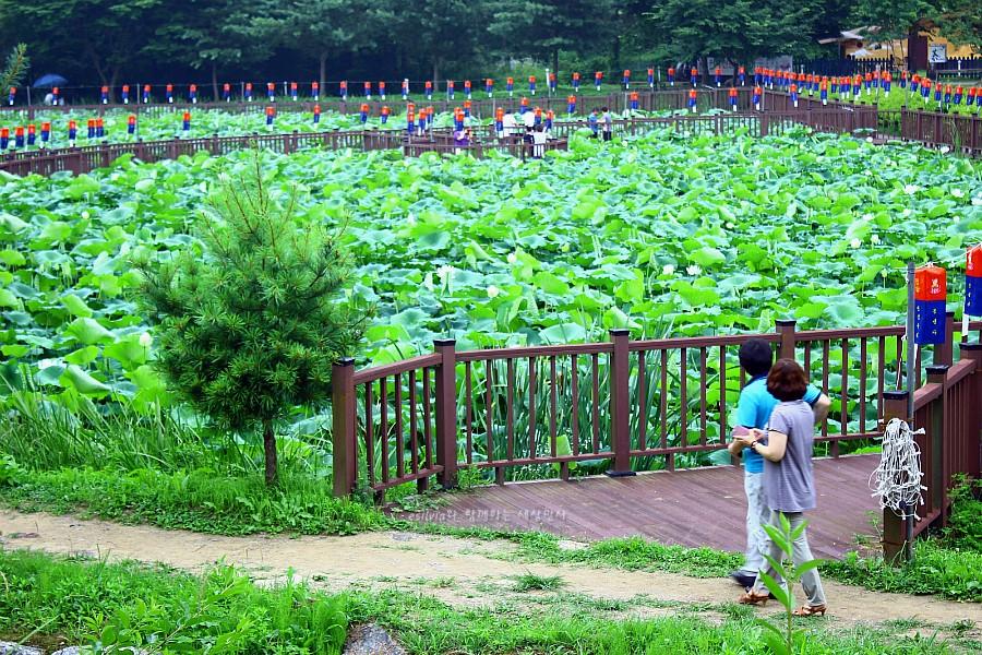 푸른 연밭을 보고있는 사람들의 모습