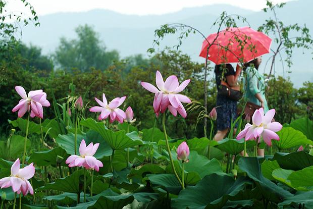 우산을 쓰고 옆꽃밭을 지나가는 사람들