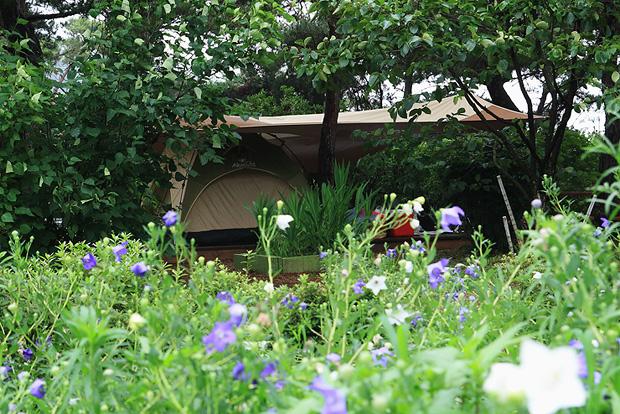 들꽃이 앞에 보이는 텐트풍경