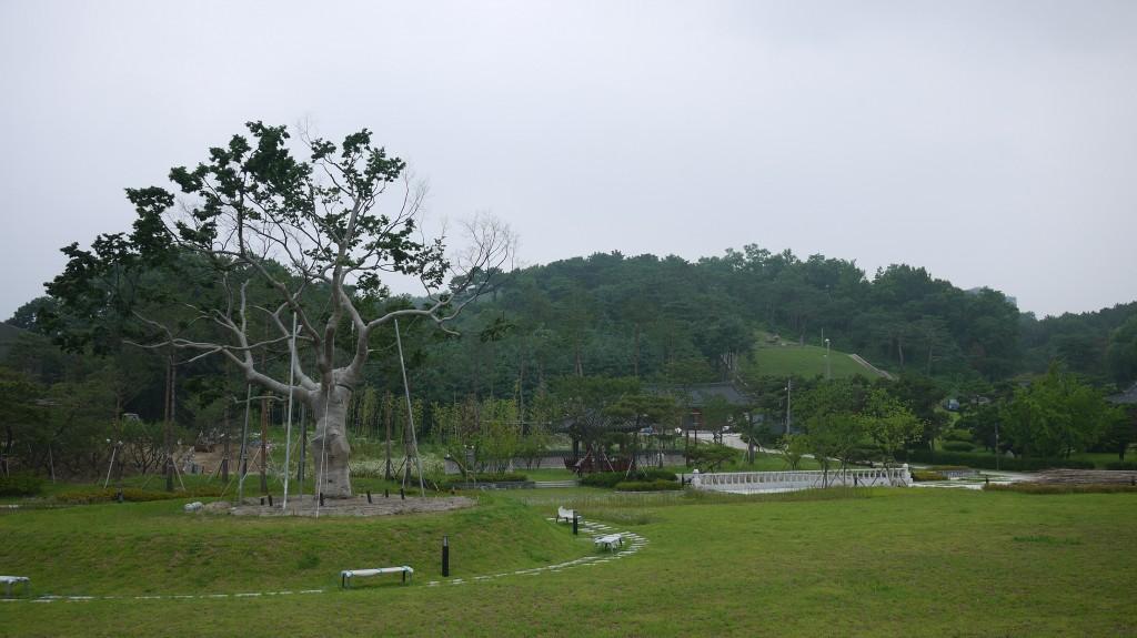 중심에 세워진 커다란 느티나무