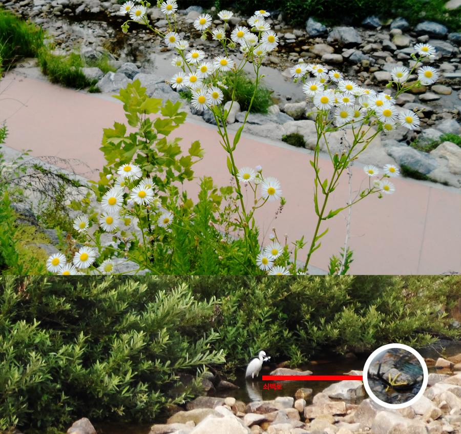 개망초꽃과 쇠백로