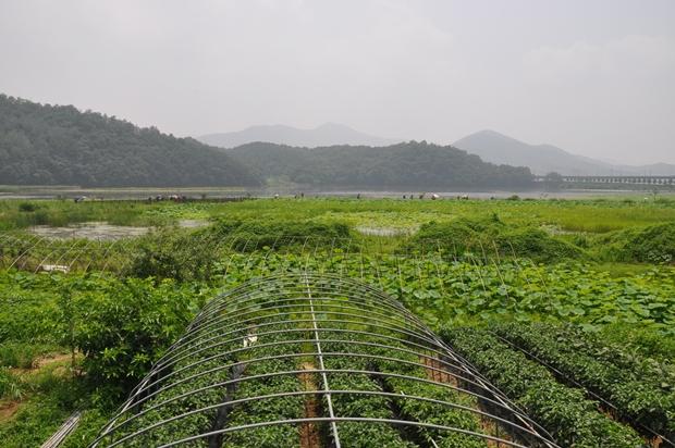 수많은 녹색 식물들이 피어 있는 모습