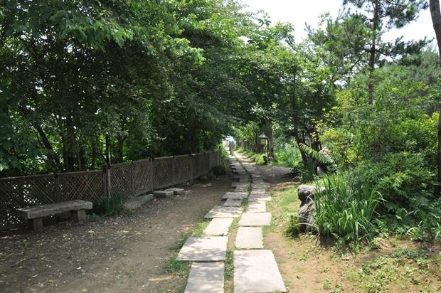초목들 사이로 나 있는 산책로의 모습