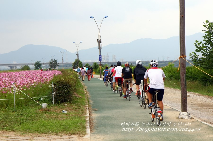 자전거를 타고 코스모스밭 옆을 지나는 사람들