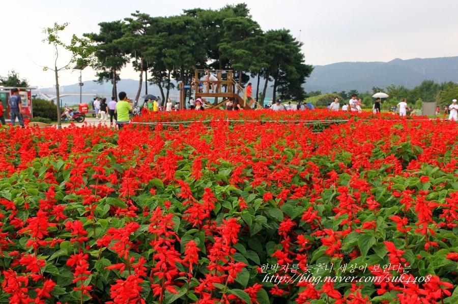 붉게 핀 꽃들