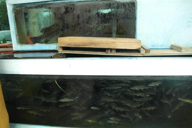 수족관에 들어 있는 다양한 민물고기들