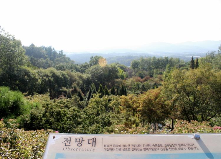 전망대에서 바라본 숲의 모습