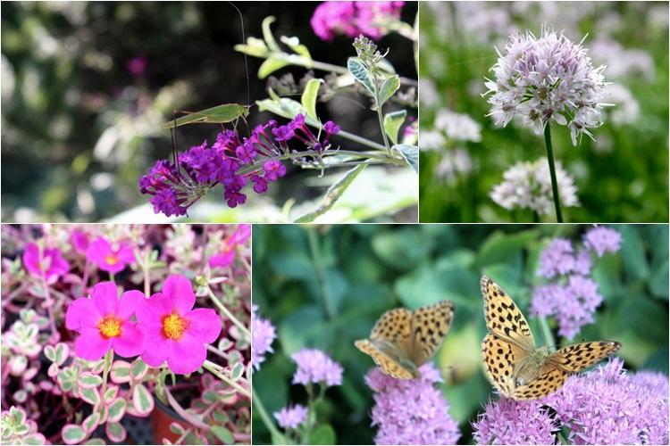 꽃과 나비의 모습