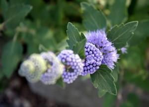 특이하게 생긴 식물의 모습