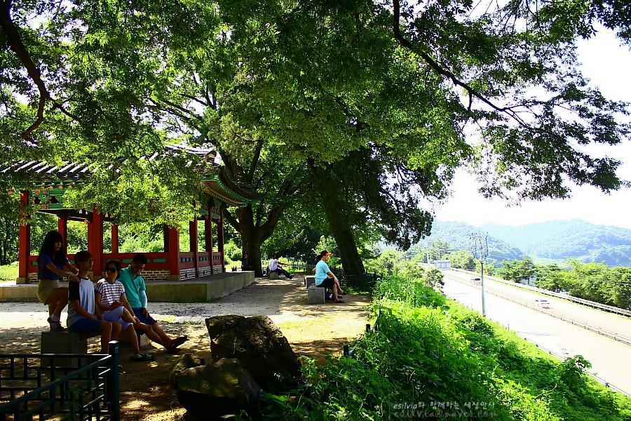 나무그늘 아래서 쉬고있는 방문객들