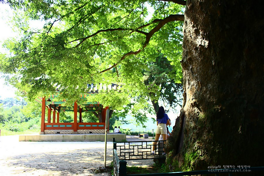 나무 그늘 아래 서있는 한 사람