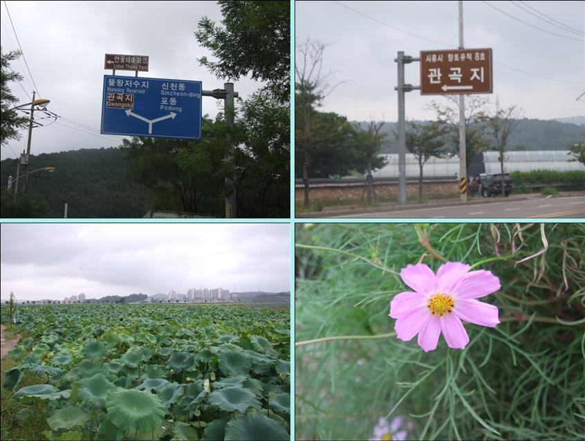 연꽃테마파크를 알려주는 교통표지판과 주변 풍경모습