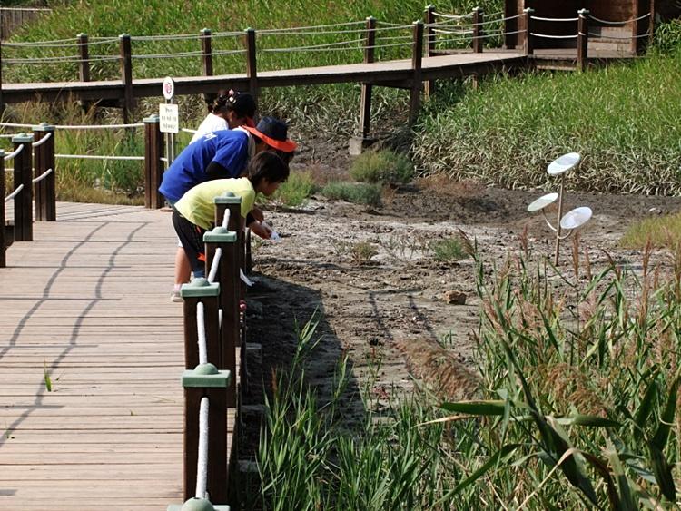 다리 위에서 갯골을 바라보고 있는 아이들의 모습