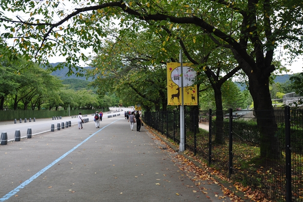 동물원 정문으로 가는 길에 떨어진 낙엽들