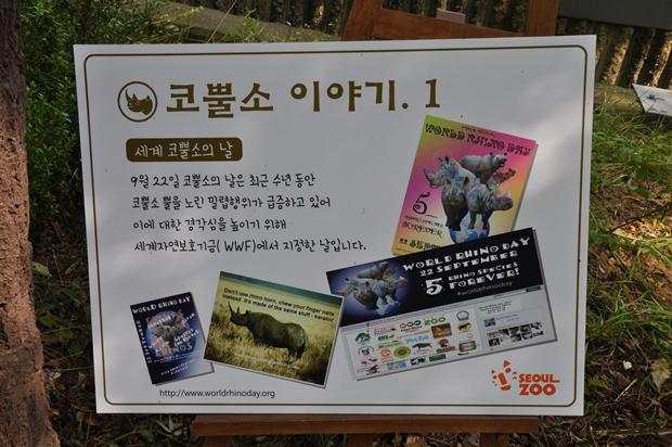 코뿔소 이야기1 [세계 코뿔소의 날] 9월22일 코뿔소의 날은 최근 수년 동안 코뿔소 뿔을 노린 밀렵행위가 급즐하고 있어 이에 대한 경각심을 높이기 위해 세계자연보호기금(WWF)에서 지정한 날입니다.