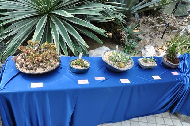 파란색 천 위에 놓인 다육식물들