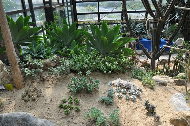 온실 안에 다육식물 전시실