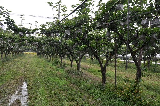 포도나무가 줄지어 있는 포도밭
