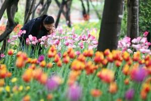 봄_튤립_모자