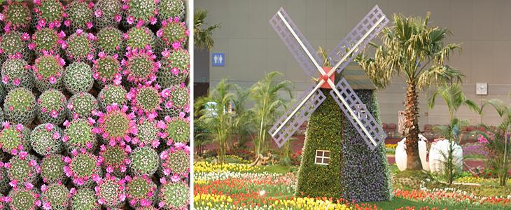 한국고양 꽃 전시회