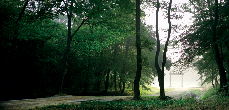 구리 동구릉의 삼림욕 길