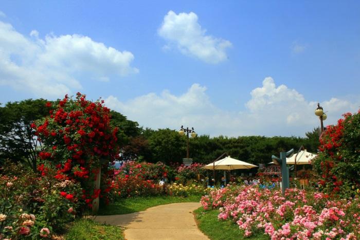 경기끼투어서울 대공원 장미원 821