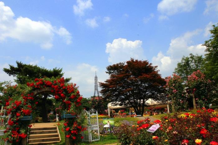 경기끼투어서울 대공원 장미원 890