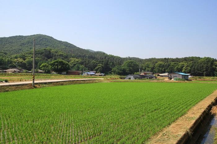 밀머리 녹색농촌체험마을의 논