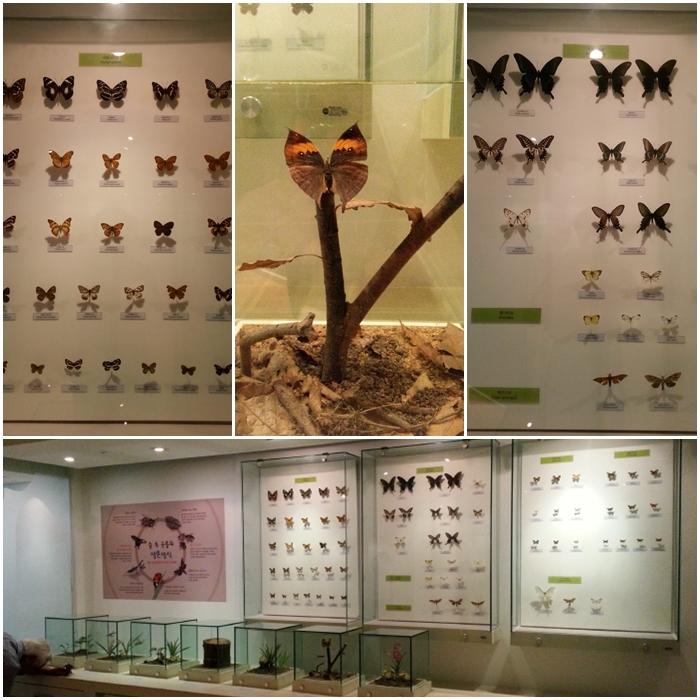 여주산림박물관