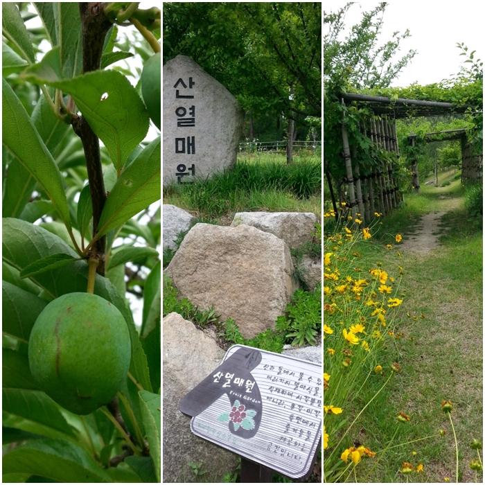 황학산 수목원 산열매원과 산야초원